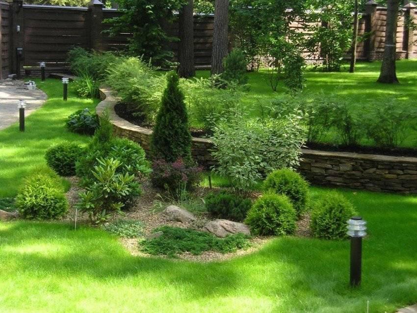 Хвойники в саду и их дизайн, фото и рекомендации