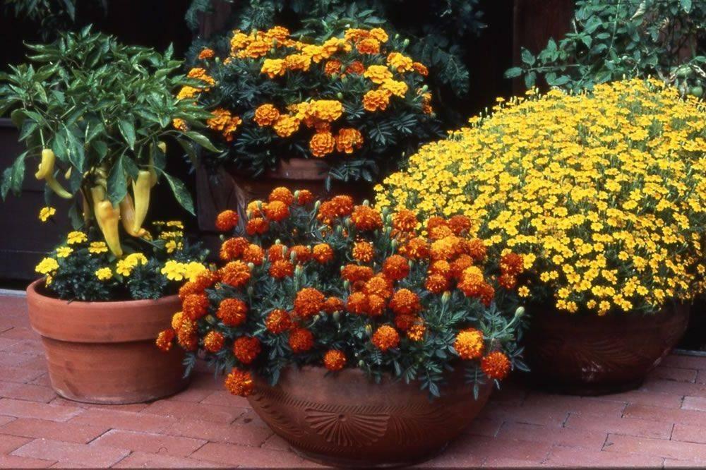 Ландшафтный дизайн цветника: стильные и красивые решения