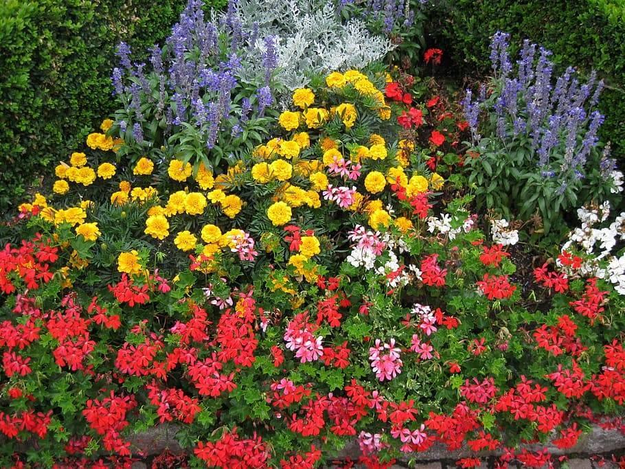 Неприхотливые цветы для сада: идеи создания клумб и участков из цветов