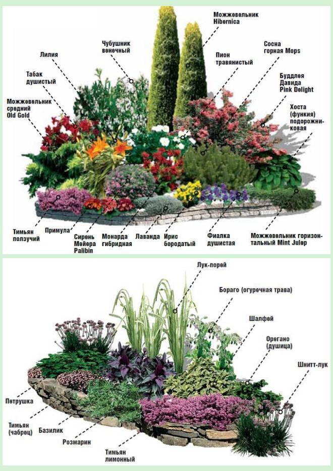 Выбор растений и цветов для альпийской горки — примеры композиций