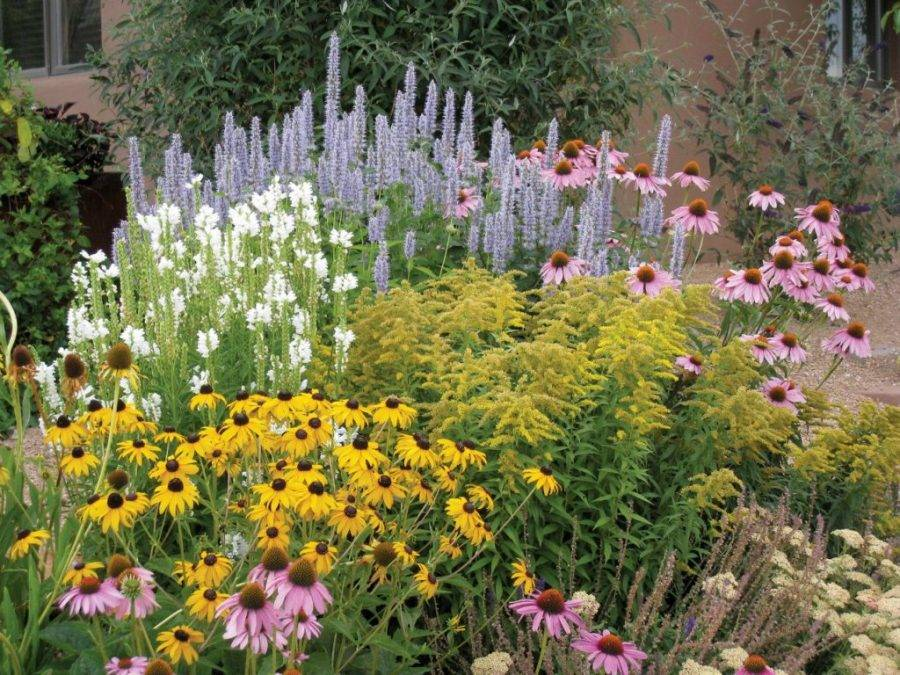 Многолетние цветы для дачи, не требующие ухода