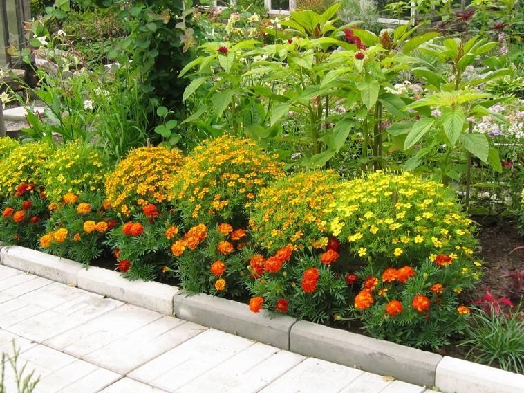 Петунии в саду и во дворе (45 фото): оформление вертикальных клумб на участке. как красиво посадить цветы на даче? варианты композиций в ландшафтном дизайне из петуний и бархатцев