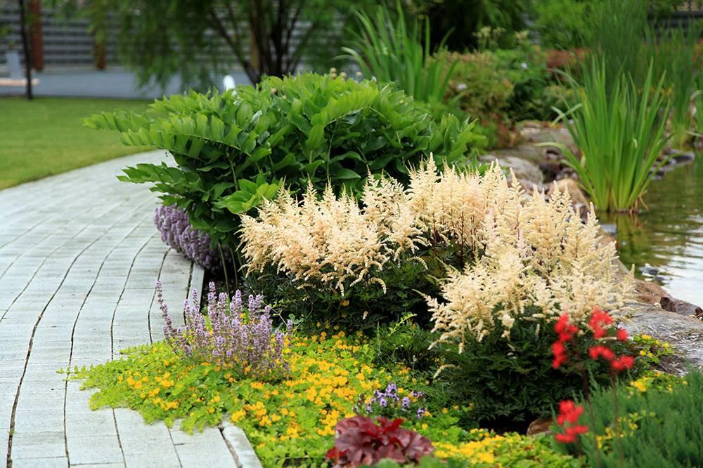 Хосты в саду (47 фото): с чем сочетаются, ландшафтные хитрости составления композиций, клумбы с гейхерами, астильбами