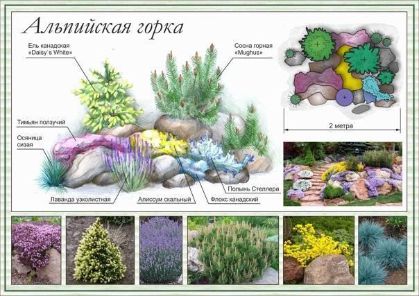 Растения для альпийской горки: самые популярные, цветущие, многолетние и хвойные