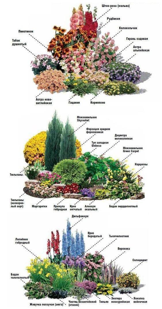 Растения для альпийской горки: названия лучших цветов, многолетников и почвопокровных