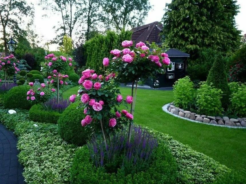 Красивый розарий на даче - схема разбивки разных видов клумб