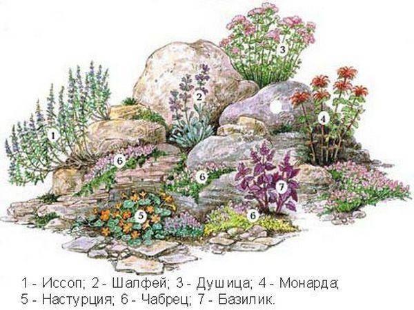 Растения для альпийской горки: фото и названия лучших цветов, многолетников и почвопокровных
