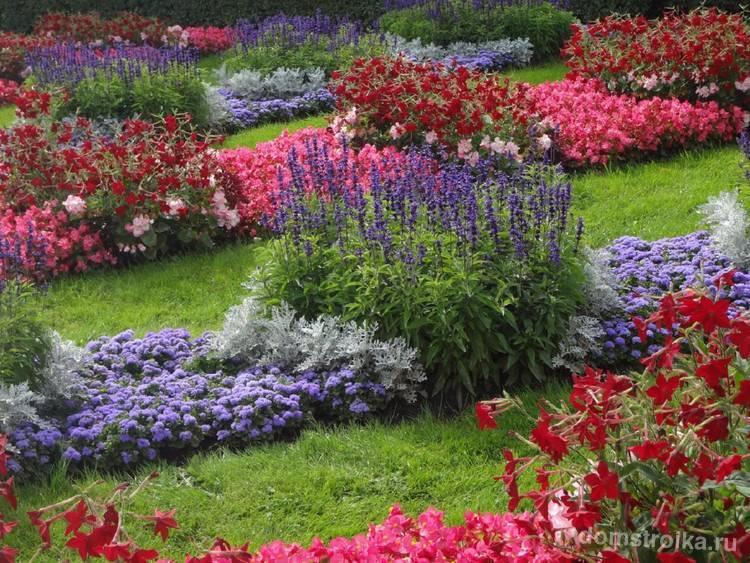 Бегония садовая: посадка и уход, фото, сорта, размножение, выращивание в открытом грунте и сочетание в ландшафтном дизайне