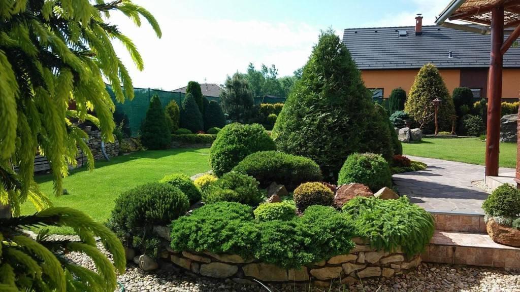 Хвойные деревья и кустарники в ландшафтном дизайне дачного участка