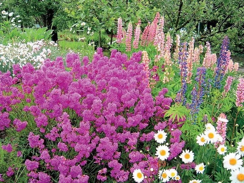 Многолетние кустарники для сада