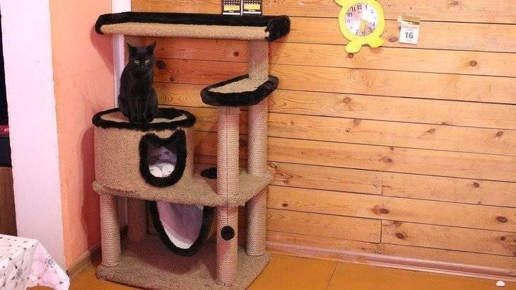 5 простых домиков для котов из дерева, фанеры и дсп: схемы, чертежи, идеи