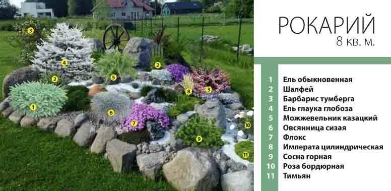 Растения для альпийской горки (94 фото): названия цветов, какие нужны для оформления ландшафта на даче своими руками, многолетние и однолетние растения