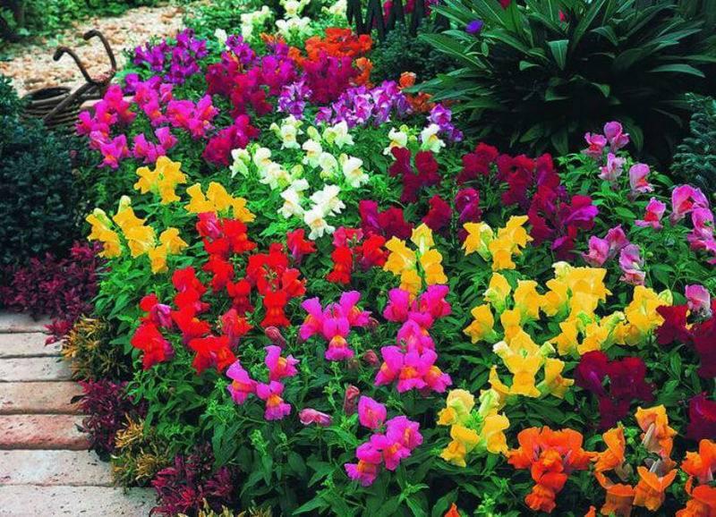Красивые однолетние цветы - 130 фото, обзор лучших видов и вариантов дизайна