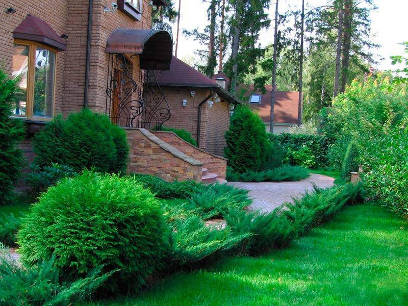 Хвойные композиции в ландшафтном дизайне на маленьком участке – фото растений
