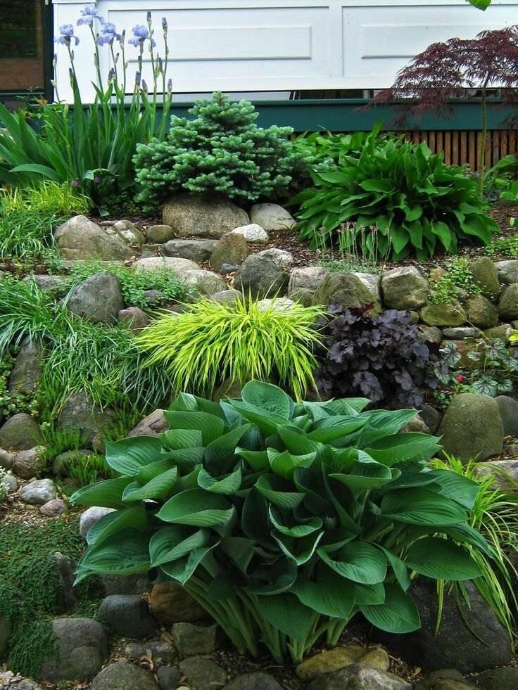 Растения в ландшафтном дизайне (51 фото): гейхера, хосты и хвойные, сочетание групп с теневыми кустами и выбор стилей, японский или «хай-тек»