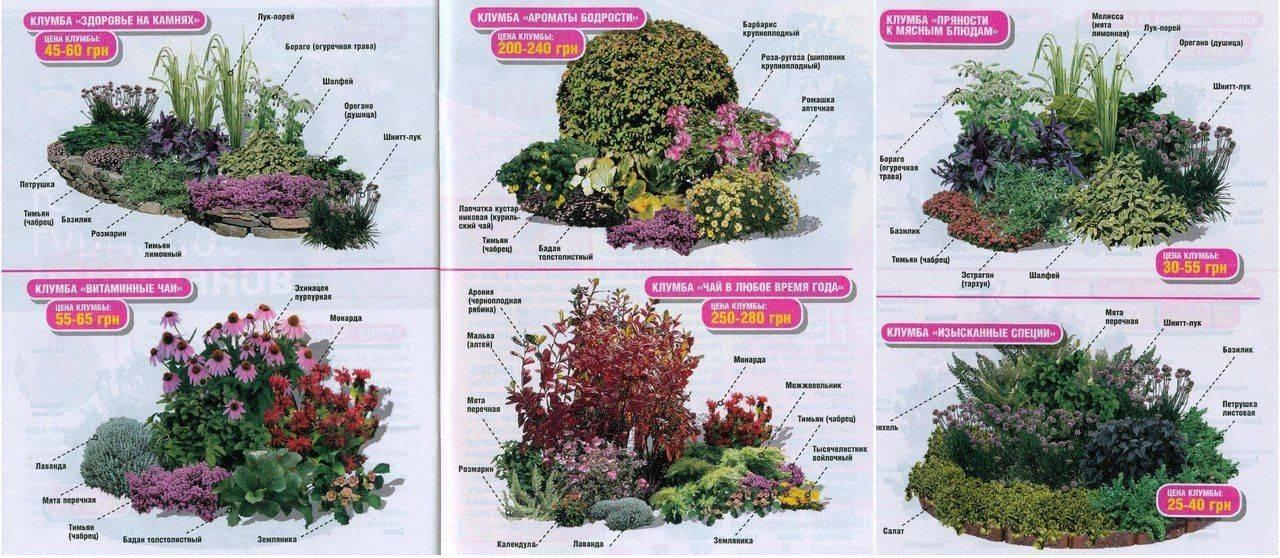 Растения для альпийской горки: названия и рекомендации по уходу