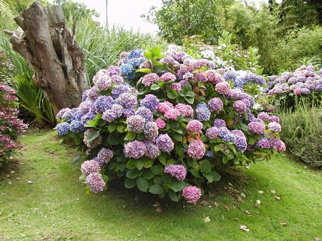 Бордюрные низкорослые цветы для клумбы: карликовые сорта, многолетники и однолетники, цветущие все лето - огород, сад, балкон - медиаплатформа миртесен