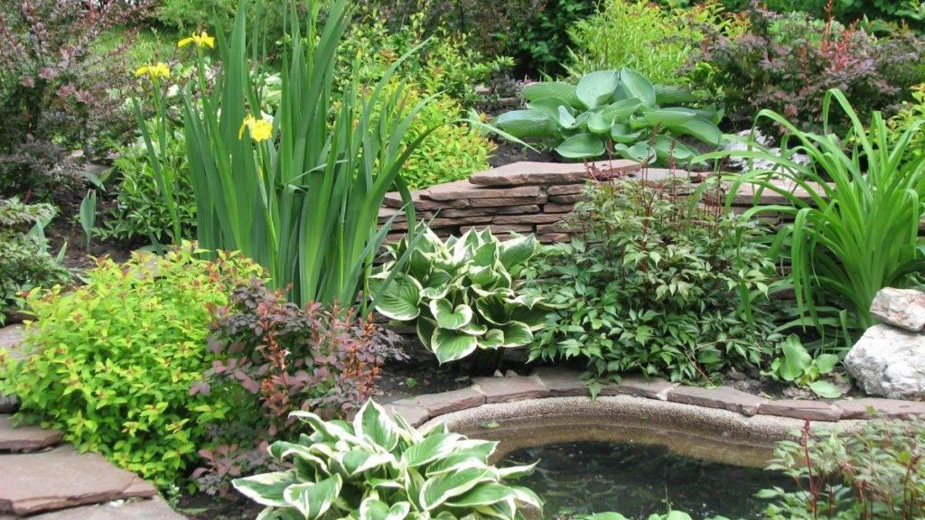 """Хоста в ландшафтном дизайне: как вырастить """"королеву тени"""" в своем саду"""