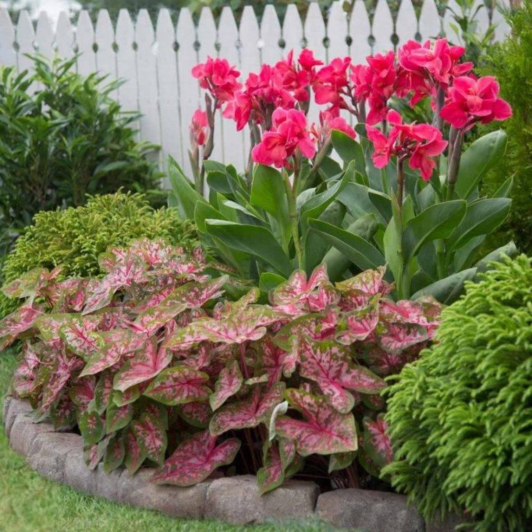 Цветы канны: их фото, выращивание, посадка и уход за растениями, хранение зимой