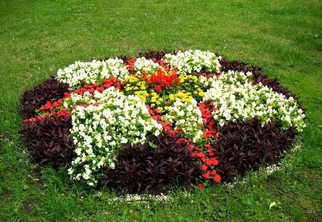 Многолетние цветы, которые цветут все лето