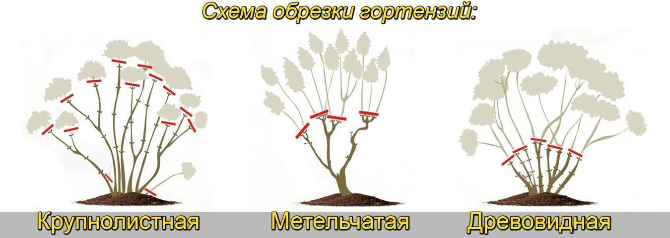 Размножение спиреи делением куста описание и фото на supersadovnik.ru