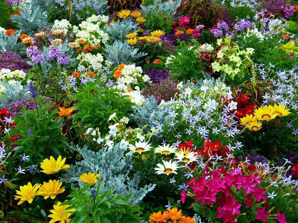 Садовые однолетние цветы для дачи – выбираем посадки для клумб и вазонов + фото, видео