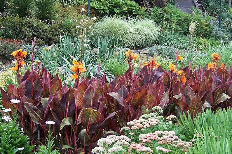Канна(canna). описание, выращивание, посадка и уход. программа pro цветы (про цветы)   flokus.ru - ландшафтный дизайн