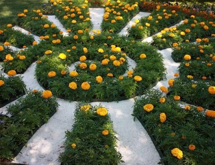 Агератум (54 фото): примеры на клумбе. выращивание в открытом грунте. многолетник это или однолетник? агератум хоустона (гаустона) и мексиканский. как собрать семена?