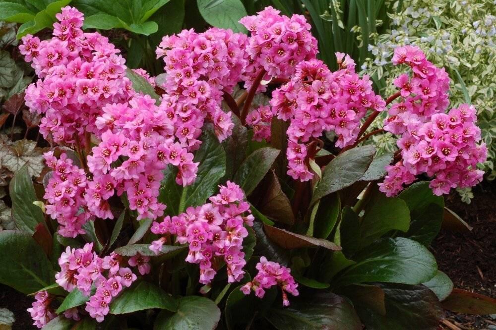 Многолетние, однолетние тенелюбивые цветы для сада цветущие все лето