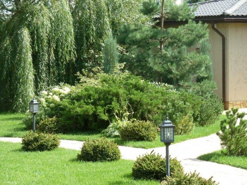 Хвойные композиции в ландшафтном дизайне сада: основы обустройства