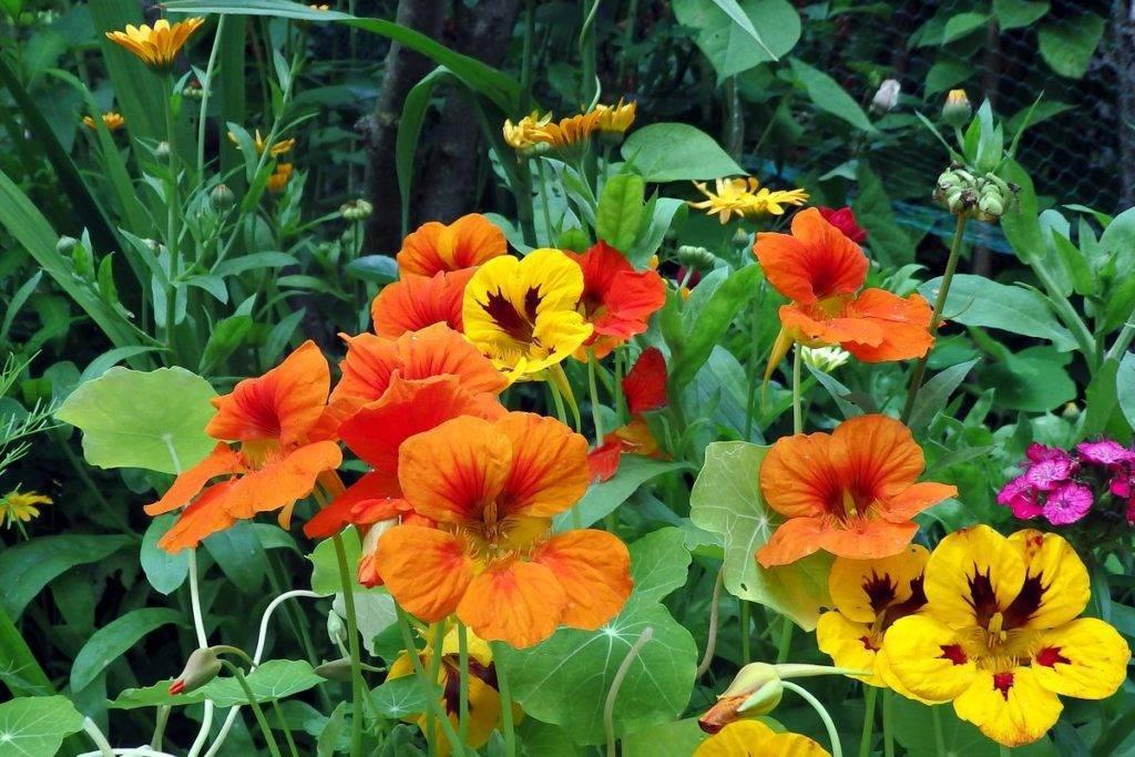 Цветы многолетники для сада: неприхотливые и долгоцветущие