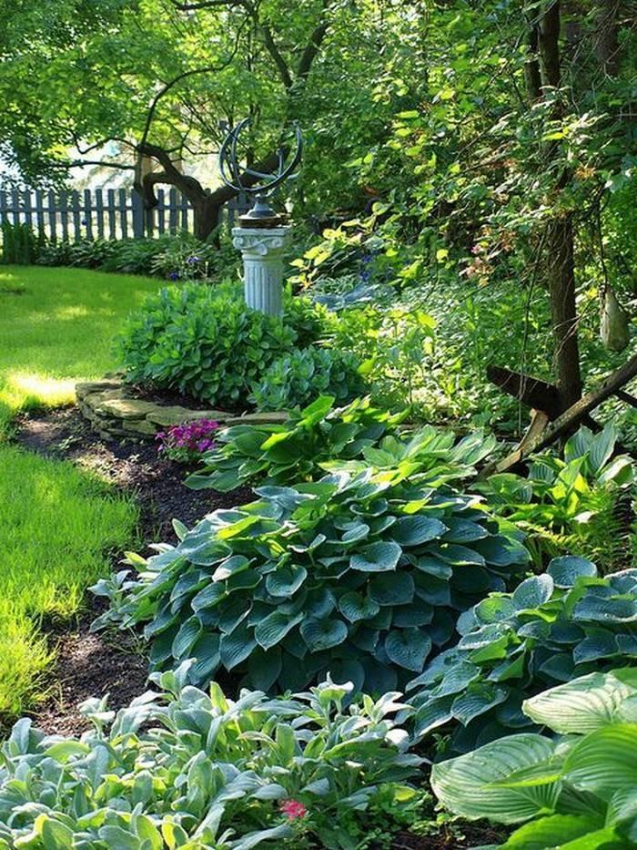 Хосты в саду: ландшафтные хитрости построения композиций в тени хосты в саду: ландшафтные хитрости построения композиций в тени
